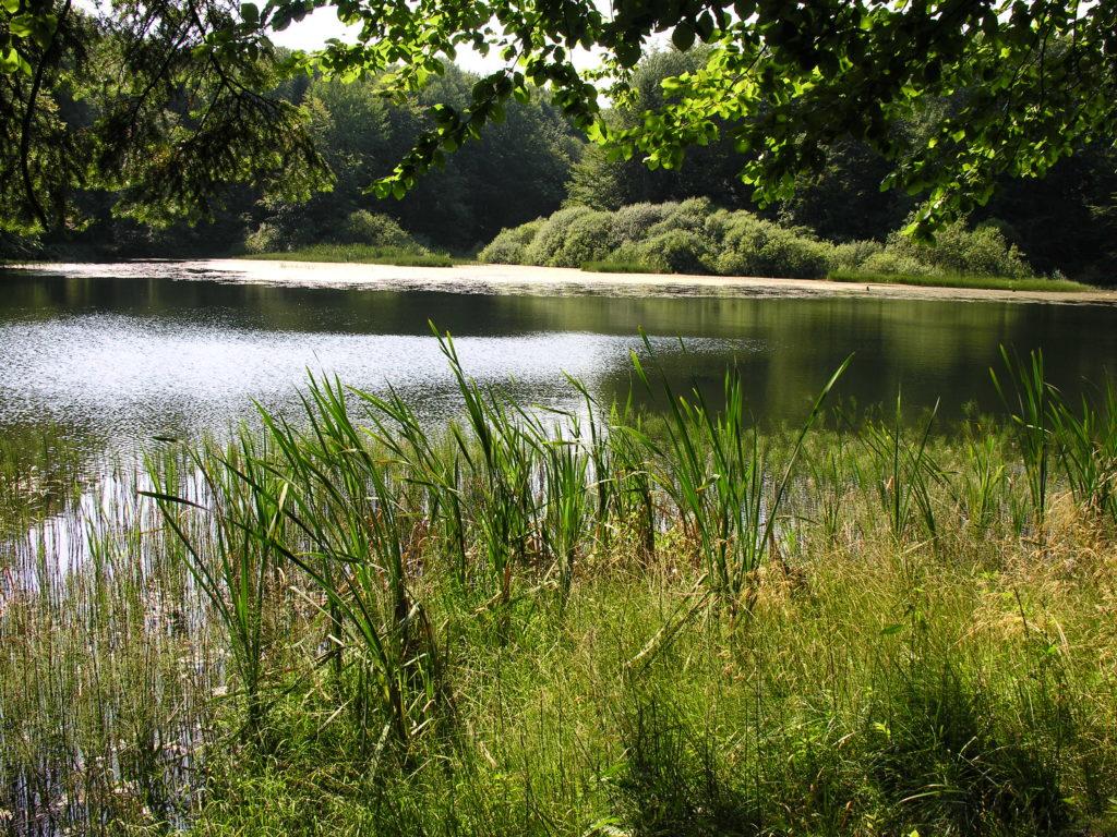 Jeziorka Duszatyńskie 1024x768 - Galeria