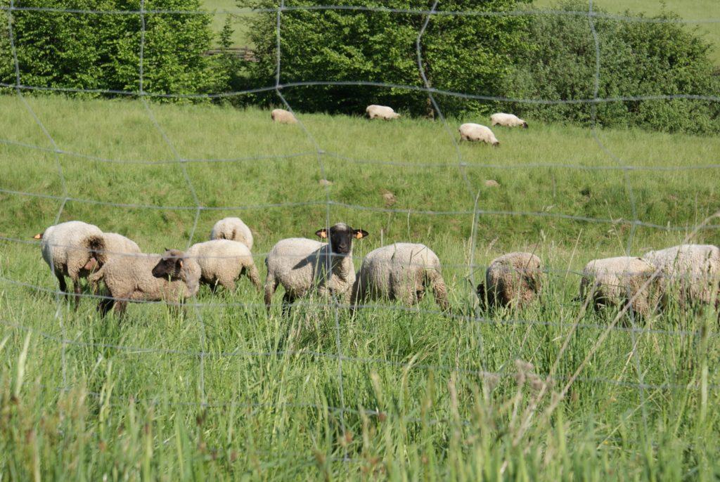 Owce Dom Na Skale 1024x686 - Galeria
